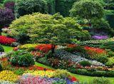 Hợp tác trưng bày cây hoa - cây cảnh