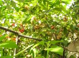 Cây trong Vườn trên mái nhà tôi
