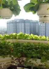 Xanh mướt vườn rau trên mái