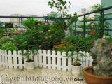 Bí quyết trồng cây cảnh trên mái