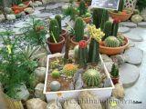 Lợi ích vườn xương rồng trên sân thượng