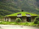 Cây cỏ tạo thảm xanh trên mái nhà