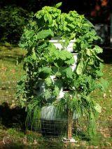 GREENMORE TOWER – Mô hình trồng rau kiểu mới