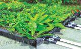 Khay trồng cây tự tưới nước