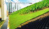 VersiWeb - công nghệ trồng cây trên triền dốc