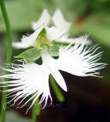 Kỳ lạ các loại hoa lan
