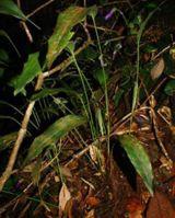 Khám phá loài thực vật mới ở Khánh Hòa