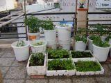 Chia sẻ cách trồng các loại rau trên sân thượng