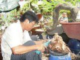 Người đưa bonsai lên sân thượng