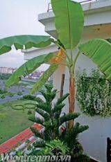 Cây cảnh, cây xanh giải nhiệt cho sân thượng