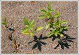 Kỳ lạ cây cối biết nhận ra họ hàng