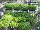 Vườn trên sân thượng giải nhiệt  nhà phố