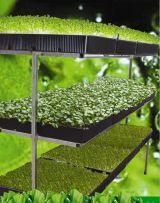 Hướng dẫn cách trồng rau mầm trên sân thượng