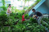 Hướng dẫn trồng rau sạch trên sân thượng