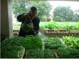 Làm nông tại gia phố thị