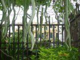 Cây rau - cây cảnh