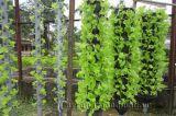 Độc đáo vườn treo và tranh bằng... cây xanh