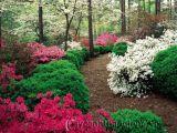 Bao nhiêu loài thực vật có hoa?