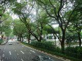 Xem mức ô nhiễm thông qua lá cây