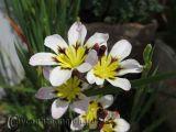Loài hoa dại rực rỡ đáng yêu