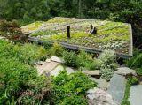 Các loại vườn trên sân thượng