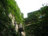 Không gian xanh trên ban công phố cổ Hà Thành