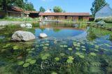 Hồ cá trong sân vườn