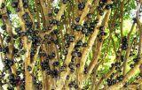 Những loài cây kỳ diệu biết