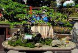 Thăm vườn trên mái nhà ông Phan Hồng Sơn