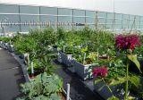Quá trình tạo vườn xanh trên mái