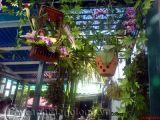 'Vườn treo' di động trong ngôi nhà nhỏ