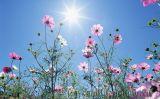 Cách chăm sóc hoa sao nháy