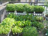 Vườn rau xanh trong nhà