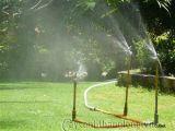 Cách chăm sóc cây cảnh và bãi cỏ
