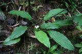 Phát hiện loài cây mới lạ ở Bình Phước