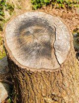 Kì lạ gốc cây có hình mặt người bí ẩn