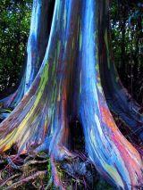 Bất ngờ về 4 loài cây kì lạ