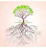Làm thế nào rễ cây biết nơi cần bò đến?
