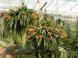 Lan hài Paphiopedilum - cách trồng và chăm sóc