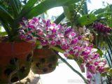 Điểm mặt một số loại hoa truyền thống có hương thơm