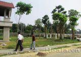 Thiết kế Khu biệt thự nhà vườn và thể thao giải trí (Xanh Villas) nhà Tổng giám đốc Ngân hàng Liên Việt (Phần 1)