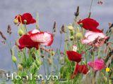 Những cánh đồng hoa đẹp mơ màng
