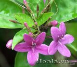 Dịu dàng xinh xinh nàng Xuân hoa