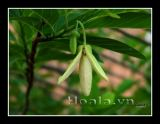 Hoa na mộc mạc vườn nhà