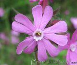 10 loài hoa hiếm nhất trên thế giới