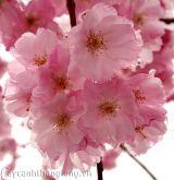 10 loài hoa đẹp nhất trên thế giới