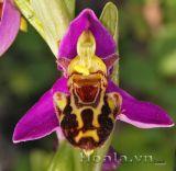 Hoa hình chú ong xinh xinh