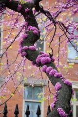 Cây hoa Hạnh Phúc và ứng dụng trong cuộc sống