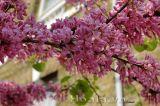 Cây hoa Hạnh Phúc-sự lựa chọn tinh tế cho không gian sống