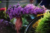 Hoa thạch thảo - Ý nghĩa của hoa thạch thảo